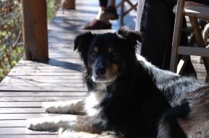 Der Hund Charly