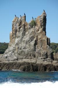 Cathedral Rocks in Kiama - die Geier warten schon