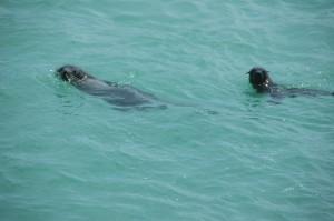 Seehunde in der Einfahrt