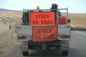 Achtung: Schafe auf der Strasse