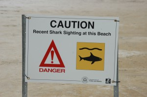 Achtung Haie