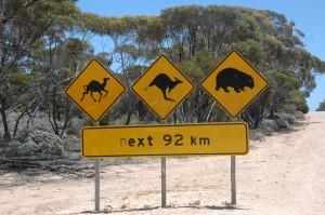 Tiere in der Nullarbor - wir haben sie nicht gesehen