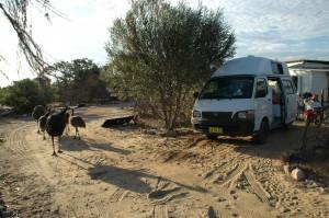 Camping mit Emus