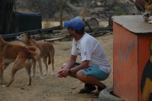 Wer sich traut darf die Dingos füttern