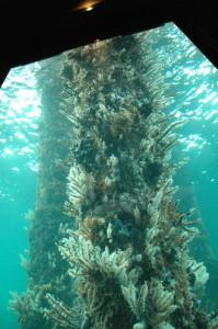 Blick ins künstliche Riff