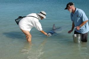 Elke füttert den Delfin