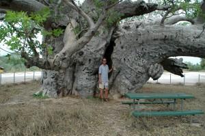 Frank und der Affenbrotbaum