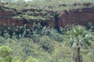 Diese Palmen findet man normalerweise am Rande von Regenwaldgebieten