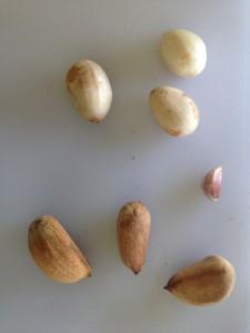 Bunya Nüsse: mit und ohne Schale. Knoblauchzehe zum Größenvergleich