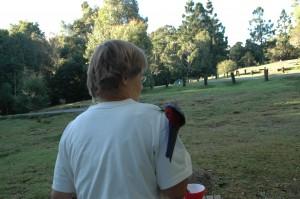 Der Papagei landet ungefragt auf Elkes Arm