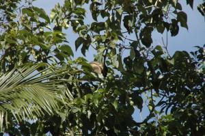 Hier schlummert ein Baumkänguru