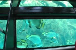 Blick aus dem Glassbodenboot
