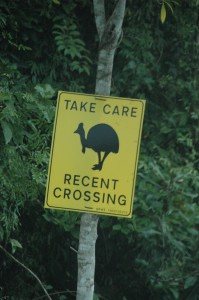 Hier wurden Kasuare kürzlich gesehen - man soll vorsichtig fahren!